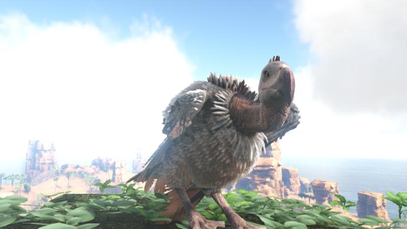 henlo vulture